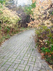 Brick Pathway by Kim Bangs January 2015