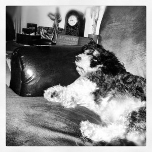 Dog Blog - Niner by Mallory - Jan 2013