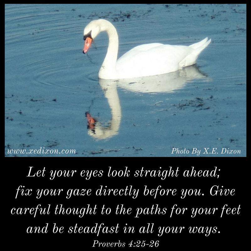 MEME - Proverbs 4 vv 25-26 - May 2, 2018