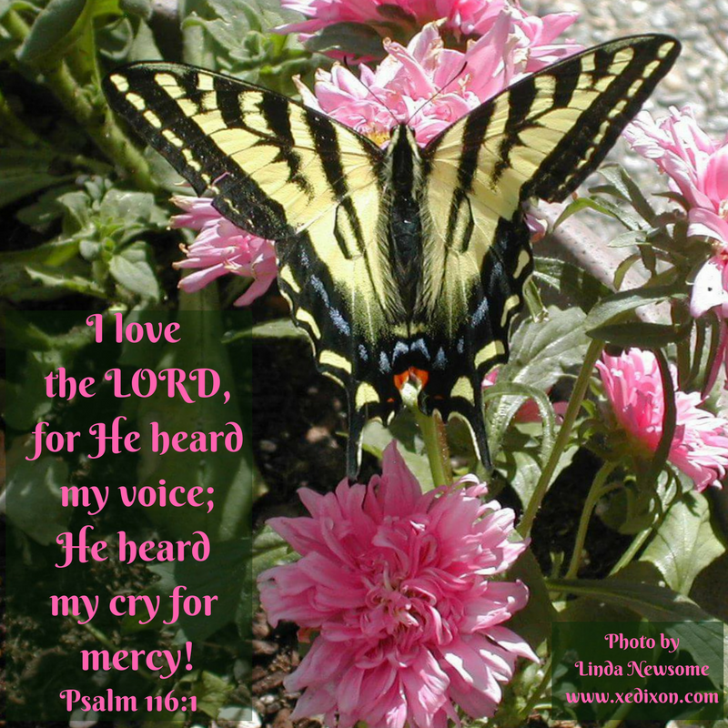 MEME - Psalm 116 v. 1 - Photo by Linda Newsome