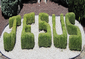Website - Jesus Shrubs - July 2010 Adobe edited